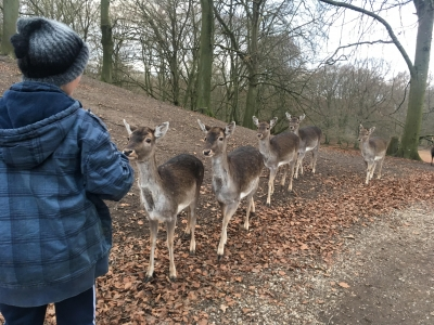 Visiting the reindeers